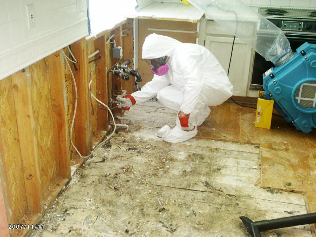 Image result for MOLD TESTING SPECIALISTS